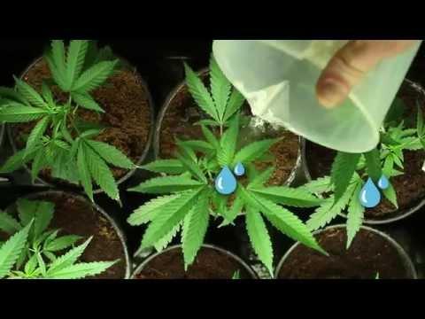 GrowBuddy - Grow Journal Software
