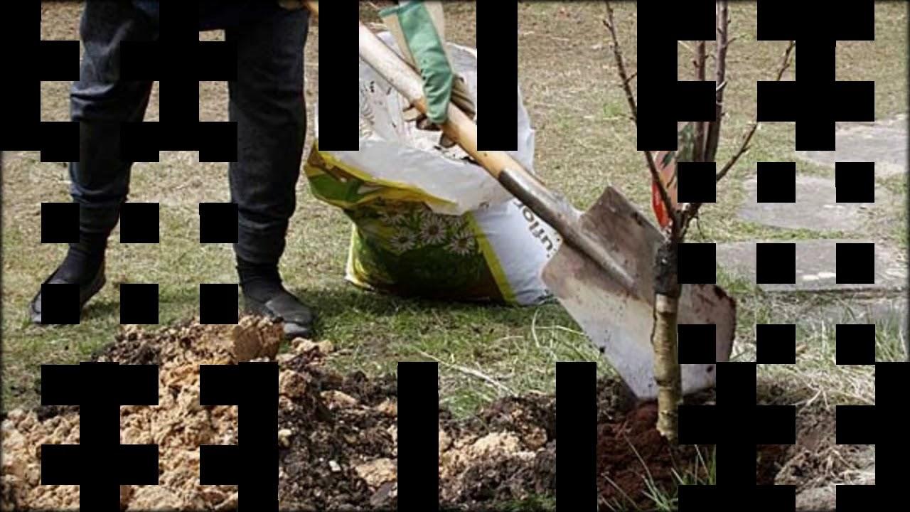 Bäume Umpflanzen bäume im garten umpflanzen so geht 039 s