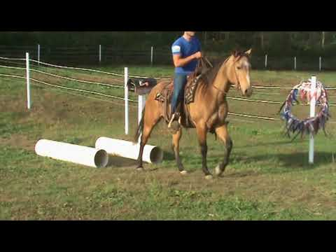 Houston Buflod RRP Thoroughbred Makeover Application for 2018