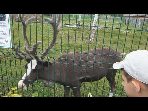 Ярославский зоопарк Давид и Артур гуляют по зоопарку