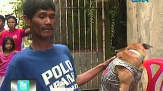 24 Oras: Asong naglalakad na tila isang tao, nagpakitang gilas sa iba pang tricks