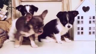 приколы с собаками собачки, приколы про собак видео Приколы смотреть онлайн
