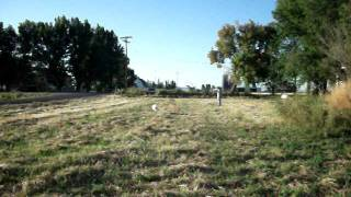 Utah Gun Dog Training For Labrador Retrievers