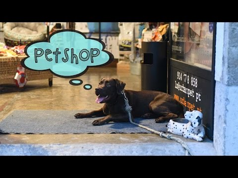 Puppy Lab Goes for the First Time to a Pet Shop