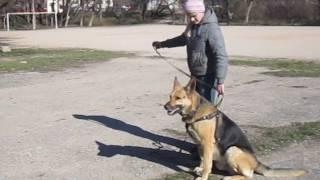 кусачая собака- охраняка