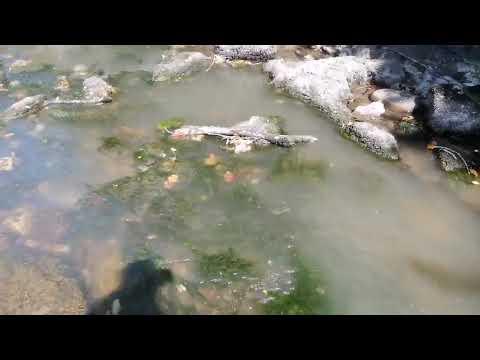 VÍDEO Vertido de aguas fecales al río Sella