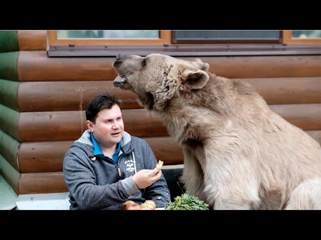 KUĆNI LJUBIMAC OD 150 KILA! Ruski par usvojio ogromnog medveda i nećete verovati šta rade..