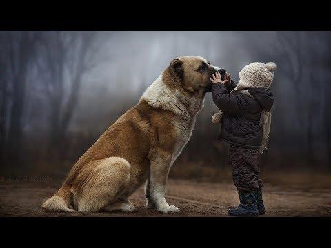 Древнейшая собака в Таджикистане. Среднеазиатская овчарка