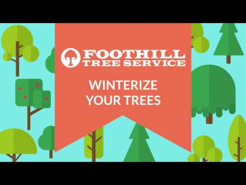 Winterize Your Trees!