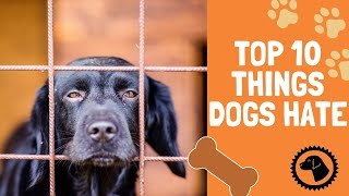 Top 10 Things Dogs Hate that Humans Do | DOG BLOG 🐶 Brooklyn's Corner