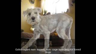 Alpha Pet Dog Lodging & Training Resort