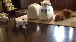 ひろしフリーズ! ひろしが初めてお泊り会した時の兄猫チロと同じリアク...