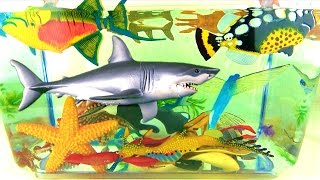 Learn Sea Animals Names Sharks Whales Fish Kids Educational Toys - Fun learning for children