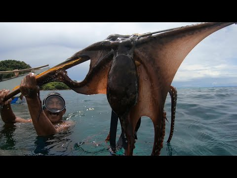 Hunting Octopus And Cuttlefish | Catch & Sell