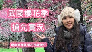 【旅遊Vlog】2019武陵農場櫻花開了沒?過年賞櫻賞梅搶先看 !! (結尾有彩蛋) #武陵農場#賞櫻#賞梅花#旅遊