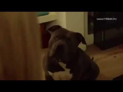 Epic Guy fuck a Dog!