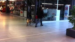 Hundesitter Berlin  ++ Hundetraining Einzeltraining Coaching ++  Hundebetreuung Hundepension