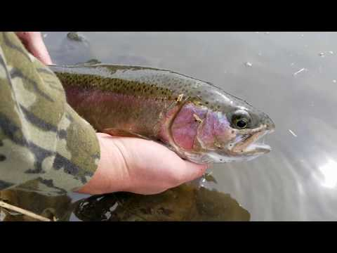 Rocky Ford Creek Fly Fishing | Washington State