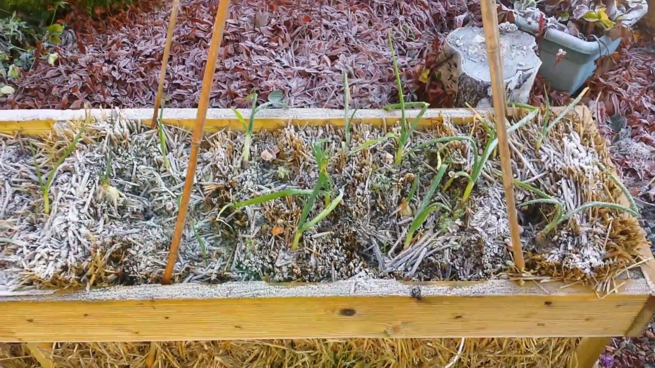 Straw Bale Gardening Complete Instructions