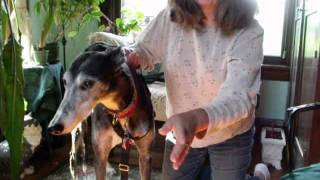 Freedom No Pull Harness Part 1 Mollycrackers