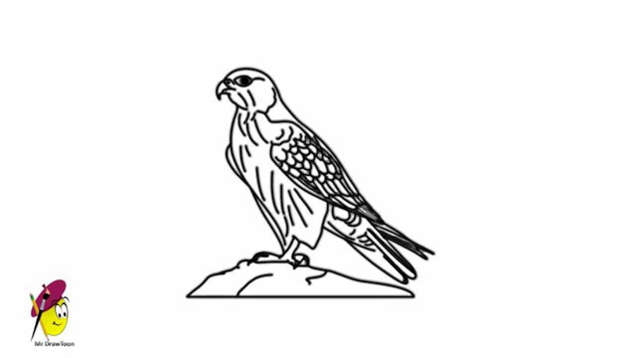 falcon how to draw a falcon bird drawings youtube