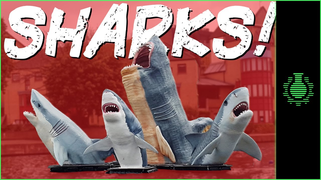 Download The Battle of SHARKS!