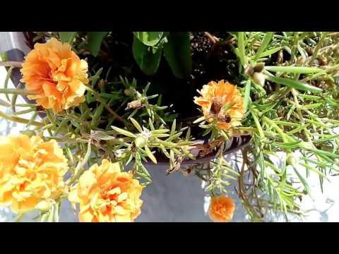 Flores de amor de un rato