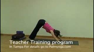 Yoga Teacher Training Program In Tampa Dog Pose Techiques
