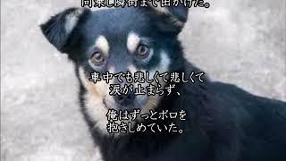 大好きな犬と少年がある事情で別れることに・・ ボロと少年どちらにとっ...