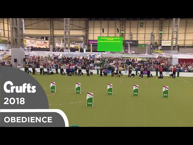 Obedience - Bitch Championship Award Parade | Crufts 2018