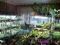 Мои комнатные растения в домашних условиях Часть 1-я