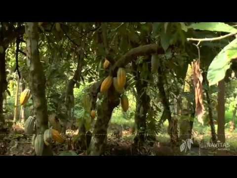 Navitas Naturals Organic Cacao