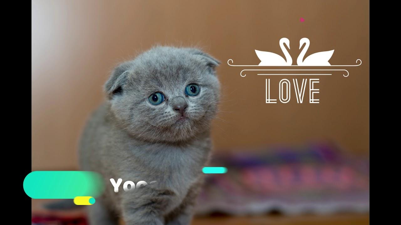 Nama Lucu Untuk Kucing Jantan
