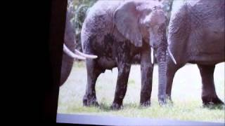 PART 1 Cynthia Moss: Celebrating Elephants 2012