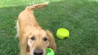 How To Train A Dog Using E-collar Technologies For Fetch
