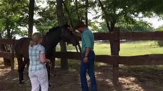 Horsemanship | Chris Shalliev | Horsenook