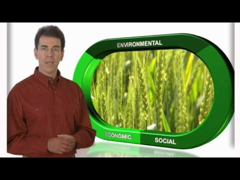 The Right Way To Grow Wheat... 4R Nutrient Stewardship