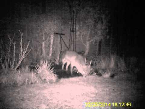 Fox 25 Feb 2014