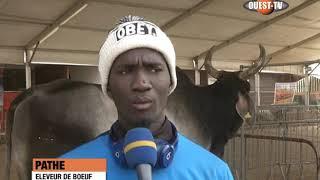 SENEGAL SALON DE L'ELEVAGE  , l'espace où le mouton vaut 20 millions