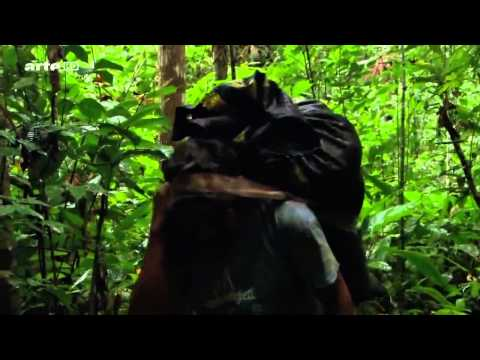 Luxuriante Amazonie   Danger   HD Documentaire