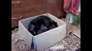 Кошка занимается с котятами
