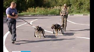 Приют для животных в Петрозаводске переполнен