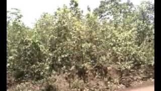 Barbil Orissa (goutam)
