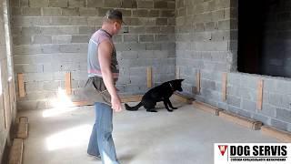 Первоначальная подготовка собак по поиску взрывчатых веществ