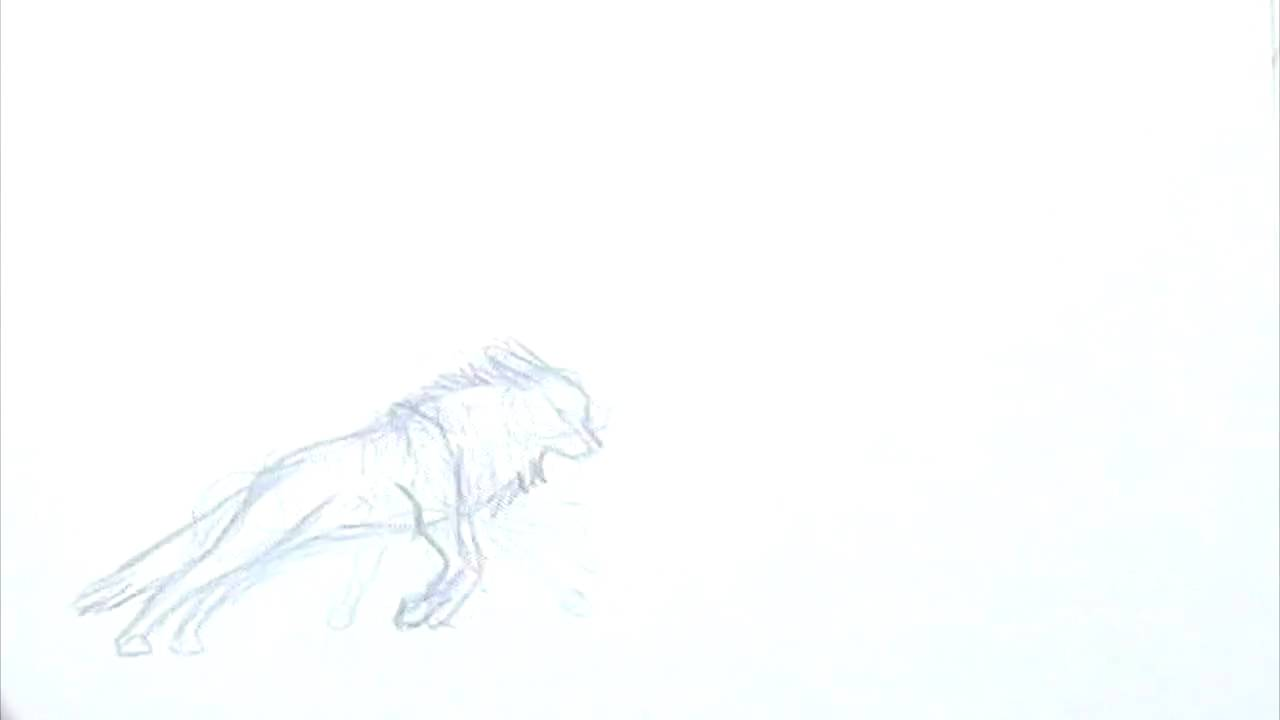 wolf jumping animation line test - Wolf Picture Frames