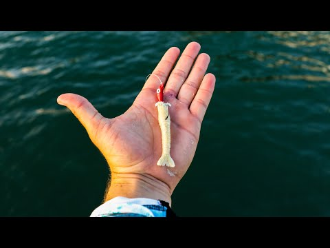 Inshore Fishing With Scented Artificial Shrimp