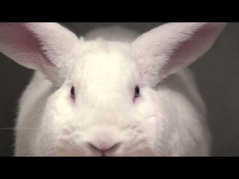 Close Up White Rabbit With Red Eyes