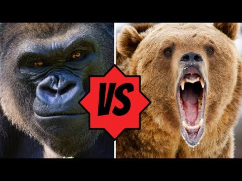 Animals That Could DEFEAT A Grizzly Bear