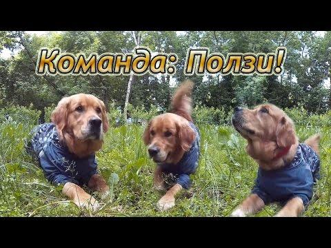 Как научить собаку ползти по команде