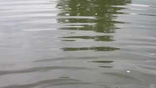 Wasser leichte Wellen am Ufer